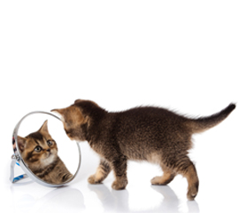 Want to Boost Employee Productivity? Look in the Mirror!