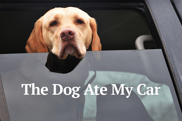 The Dog Ate My Car